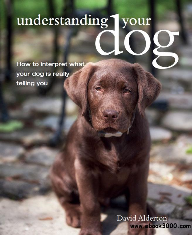 Understanding Your Dog: How to interpret what your dog is really telling you