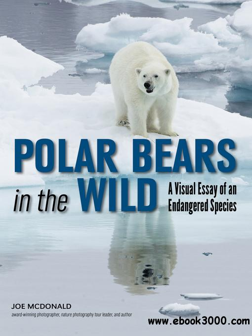 Polar Bears In The Wild: A Visual Essay of an Endangered Species